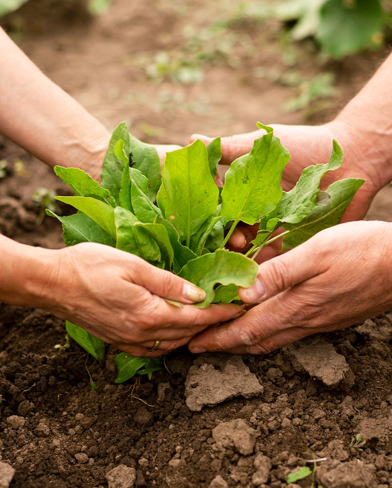 ecofood-about-plant